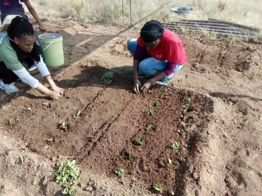 girl planting