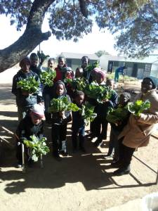 Spinach harvest with school learners