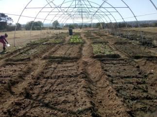 soil and garden