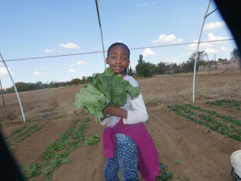 young girl and big cabbage plant
