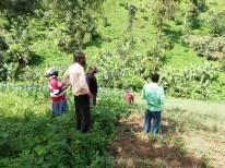 Uganda gardens